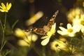 Картинка цветок, цветы, бабочка, крылья, лепестки, усики, мотылек