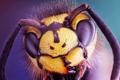 Картинка взгляд, макро, голова, насекомое