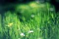 Картинка зелень, трава, боке