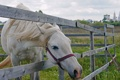Картинка лето, конь, красота