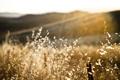 Картинка трава, макро, свет, забор