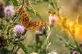 Картинка цветы, природа, фон, бабочка