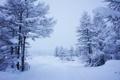 Картинка зима, снег, Пейзаж, снежная долина