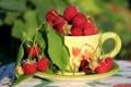 Картинка лето, малина, ягода