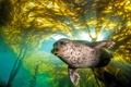 Картинка природа, тюлень, вода