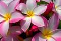 Картинка цветы, лепестки, луг, клумба