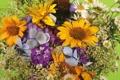 Картинка цветы, букет, растения