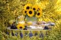 Картинка подсолнухи, цветы, желтый, природа, стол, сок, виноград