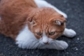 Картинка кошка, кот, взгляд, рыжий