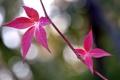 Картинка осень, листья, природа, ветка, багрянец