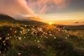 Картинка закат, цветы, природа
