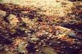 Картинка осень, Город, осенние обои, Сity, листва, листья, Улица