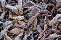 Картинка листья, природа, заморозки, макро