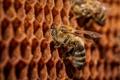 Картинка соты, макро, пчёлы