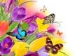 Картинка цветы, природа, коллаж, бабочка, крылья, крокус