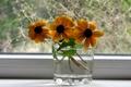 Картинка макро, цветы, фото, картинки, растения, окно, натюрморт