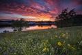 Картинка закат, луг, река, цветы