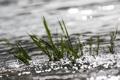 Картинка трава, вода, макро