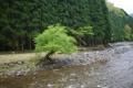 Картинка лес, галька, берег, река, холмы, дерево
