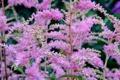 Картинка цветок, природа, растение, текстура