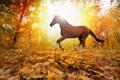 Картинка осень, лес, листья, природа, лошадь
