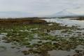 Картинка камни, небо, фото, Камчатка, море, мох, природа