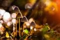 Картинка природа, грибы, макро