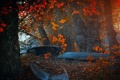 Картинка лес, осень, лодки