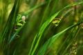 Картинка трава, листья, зеленые, богомолы