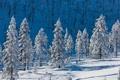 Картинка холод, снег, елки