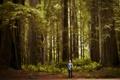 Картинка лес, деревья, природа, человек
