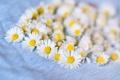 Картинка цветы, ромашки, лепестки, белые, много