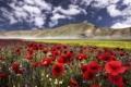 Картинка цветы, горы, маки, луг, Италия, Italy, васильки
