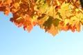 Картинка nature, sky, небо, 1920x1280, light, осень, листья