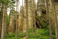 Картинка лес, трава, деревья, камни, скалы, кусты