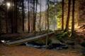 Картинка лес, деревья, мост, природа, Германия, Бавария