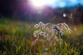 Картинка трава, лучи, солнца, кустик