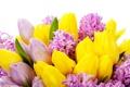 Картинка тюльпаны, tulips, flowers, цветы