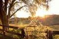 Картинка природа, осень, свет, поле