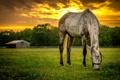 Картинка лето, закат, конь