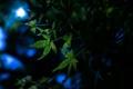 Картинка листья, ночь, природа