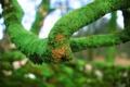 Картинка зелень, дерево, мох, ветка, кривая