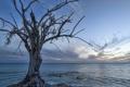 Картинка море, облака, закат, дерево, сухое