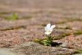 Картинка цветок, макро, улица