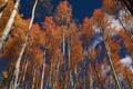 Картинка осень, небо, облака, деревья, ствол