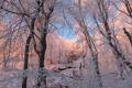 Картинка зима, иней, лес, снег, деревья, ветки, природа