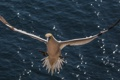 Картинка вода, птица, крылья, чайка