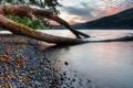 Картинка озеро, камни, дерево, Канада, Canada, листья.