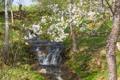 Картинка весна, nature, цветущие деревья, водопад, blossoming trees, a waterfall, природа