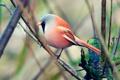 Картинка ветки, птица, птичка, птиц, красивой